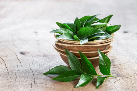 Fresh curry leaves in coconut bowl on wooden background with copyspace