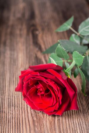 Single red rose on wooden background with copy space love romance wedding birthday concept vertical shot Stock fotó