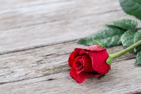 Romantic background with one blooming red rose on wooden rustic table copy space. Mothers day, Valentines day, wedding, birthday, anniversary.