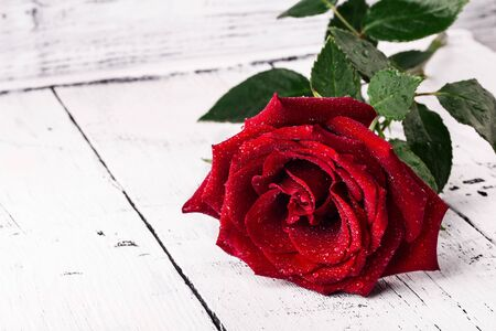 Single red rose water drops on white wooden rustic background with copy space, love romance wedding birthday concept