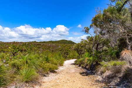 A sandy hiking trail through the forest at clear day Noosa National Park. Popular beautiful landmark at Sunshine Coast, Queensland, Australia. Eco-tourism, vacation, traveling, walking, relax.