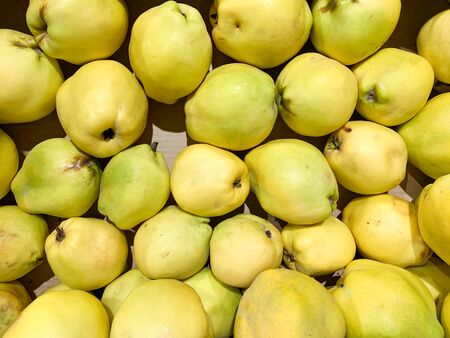 Yellow fresh quinces fruits for sale in a market as a background, organic wholevfood in supermarket. Stock fotó