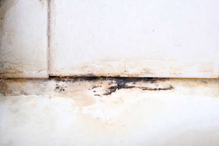 Mold fungus and rust growing in tile joints in damp poorly ventilated bathroom with high humidity, wtness, moisture and dampness problem in bath areas concept.