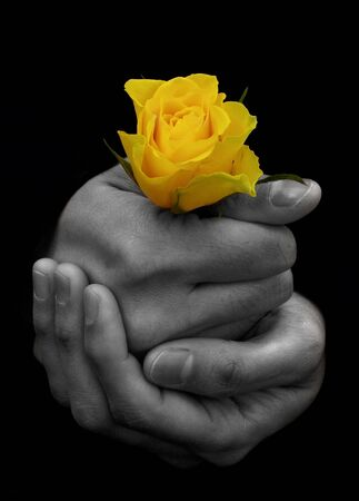 Hand holding a single yellow rose