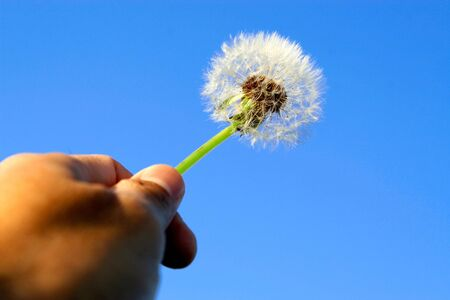 Hand holding a dandelion up towards the sky