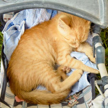 Ginger kitten sleeping in the crib