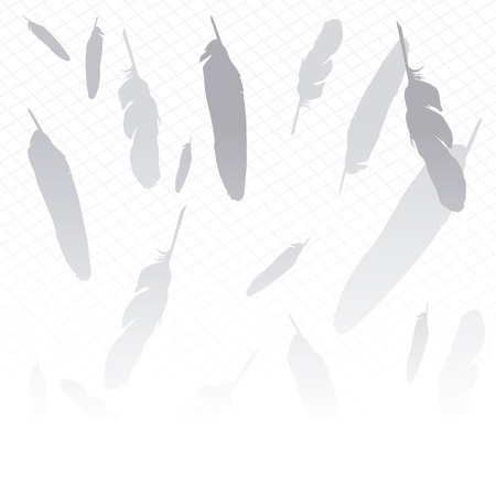 Vector image of background feathers in gray and white
