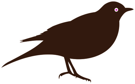 thrush: Blackbird or thrush Illustration