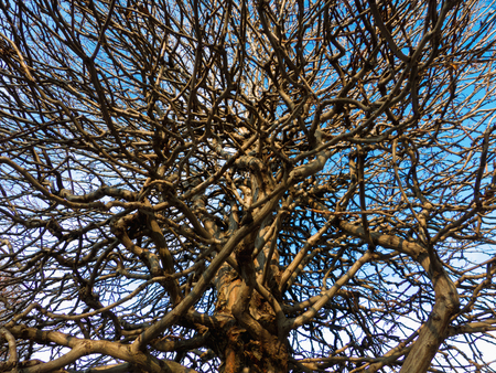 ramification: branched tree without leaves, network