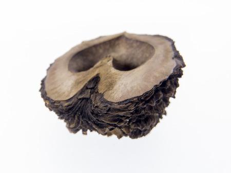 black walnut, Juglans nigra fruit