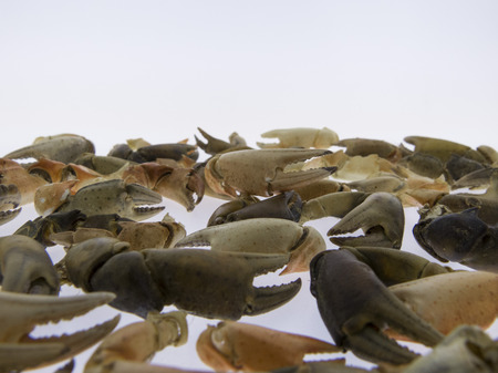 nippers: Nippers of crabs, white background Stock Photo