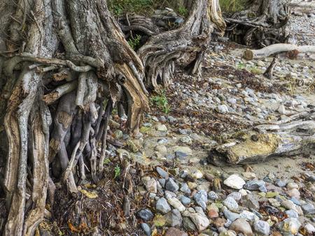 岸に腐食 写真素材 - 50209253