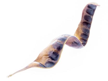 グレディットシア triacanthos - サイカチの木