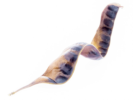 langosta: Gleditsia triacanthos - acacia árbol