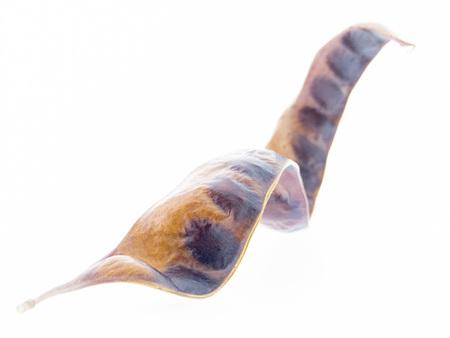 langosta: Gleditsia triacanthos - acacia �rbol