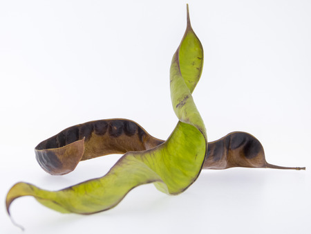 蜂蜜イナゴ - グレディットシア triacanthos の果実