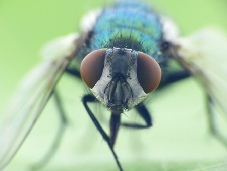 -昆虫の目、フライの詳細マクロ 写真素材