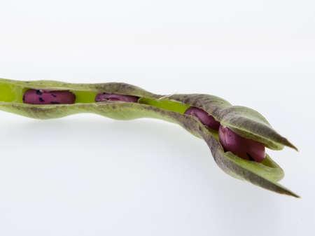 登山豆火に白い背景に、栄養価の高い豆
