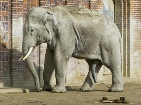 ライプツィヒ、ドイツの動物園に象 写真素材