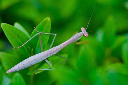 vegatation: Praying Mantis in the Garden