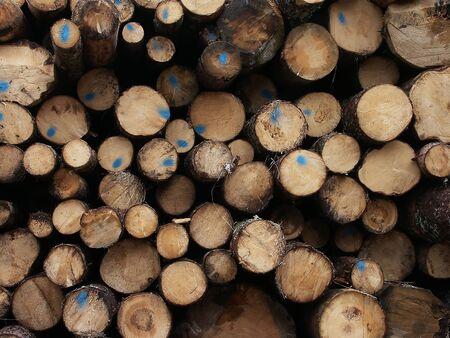tree trunks Stock Photo - 10726772