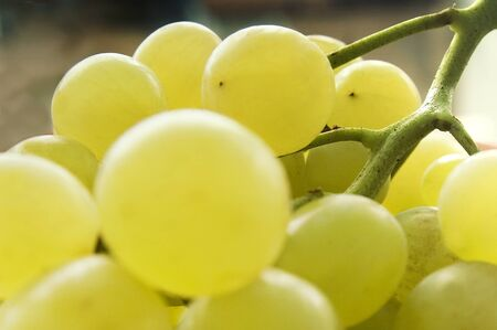 grapes Stock Photo - 10760059