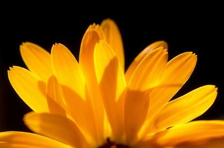 blumen: Sonnenstrahlen