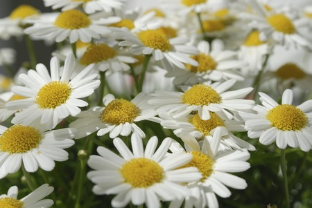 Deasy flower