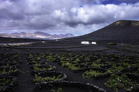 The Wine Valley of La Geria / Lanzarote / Canary Islands