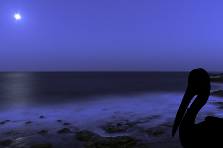 Silhouette of a wild pelican with moon over the ocean - Los Cocoteros, Lanzarote, Canary Islands, Spain