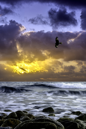 Dramatic sunrise over the sea with flying falcon - Gouves, Crete, Greece