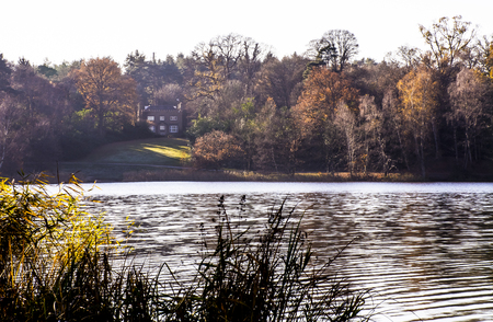 English autumn - Virginia Water, United Kingdom