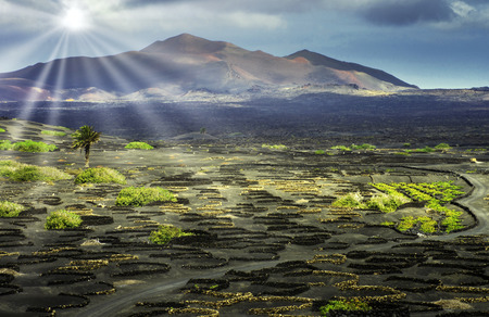 Wine Valley of La Geria - Lanzarote, Canary Islands, Spain Stock Photo