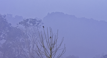 Foggy morning in indian jungle - Jim Corbett National Park, India