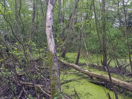 Wild part of Patis Natural Park (Parc Naturel du Patis) in Meaux, France 版權商用圖片
