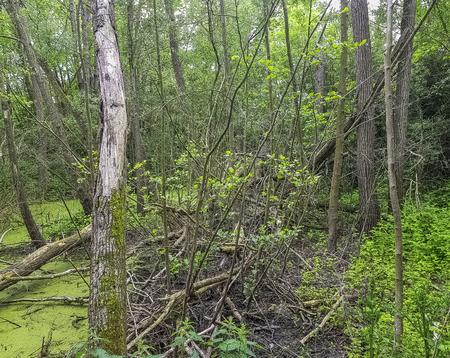 Wild part of Patis Natural Park (Parc Naturel du Patis) in Meaux, France 版權商用圖片 - 124719430