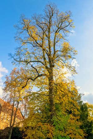 Autumn in British park - Osterley, Isleworth, London, United Kingdom