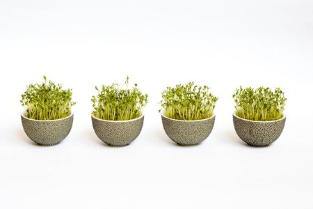 sprouted: Four traditional dotted easter flowerpots with green sprouted corn