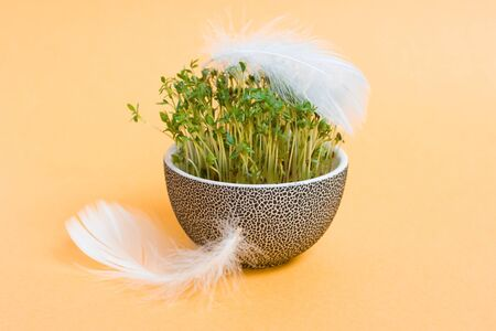 sprouted: Traditional easter flowerpot with sprouted corn and white feathers