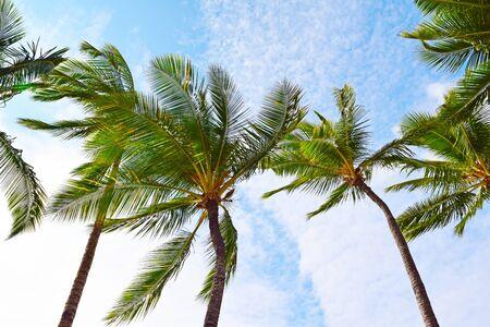 Maui Palm Trees Reklamní fotografie