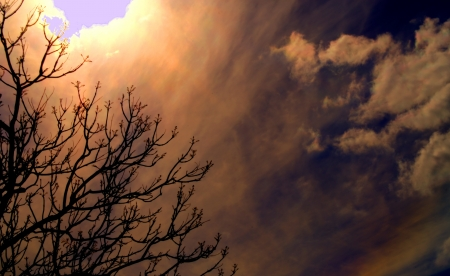 Storm Behind Bare Tree photo