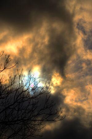 moody sky: Tempesta Dietro Albero spoglio