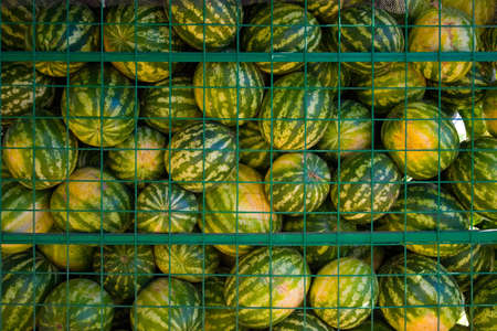 roadside stand: Many watermelons in a trade cart in a market Stock Photo