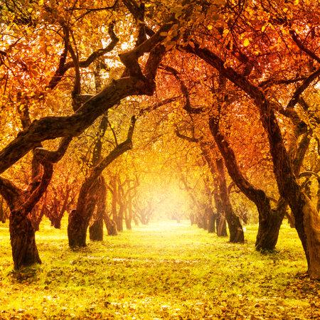 Daling van de herfst Herfst park herfst bomen en bladeren