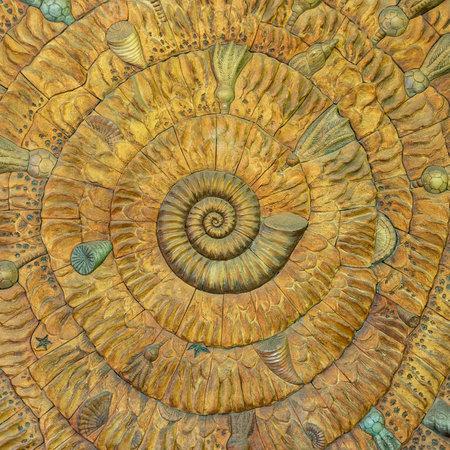 An amazing fibonacci pattern in a nautilus shell Stock Photo