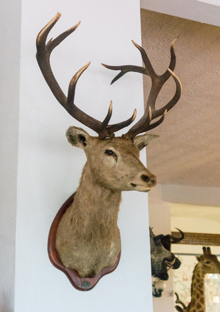 Stag's Head on a wall