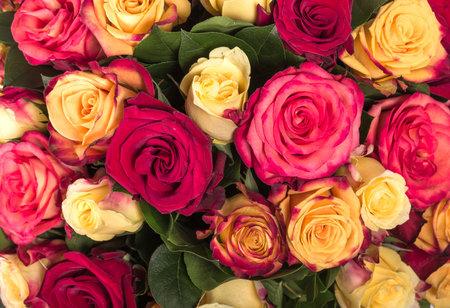 Abstracte achtergrond van bloemen. Detailopname
