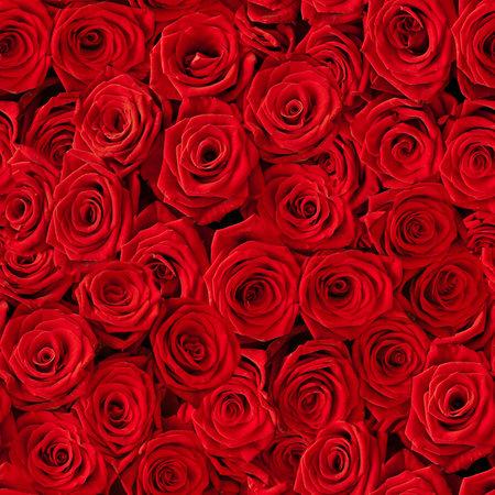 Plenty red natural roses seamless background Standard-Bild