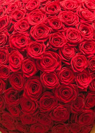 자연 빨간 장미 배경 무늬