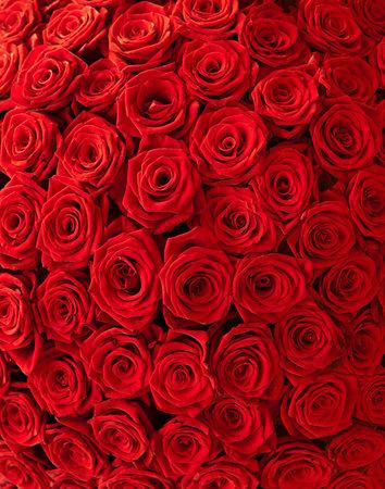 Plenty red natural roses background 写真素材